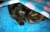 DIY Bed van de hond (of kat Bed)