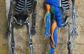 Spier anatomie met Sugru en een Halloween skelet