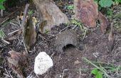 Maken van een huis van de bug uit een lege pot