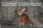 Suburban Habitat voor dieren in het Wild