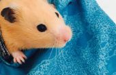 Hamster Carrier