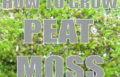How To Grow: Turf mos