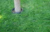 Hoe Plant Water Saver RTF graszaad