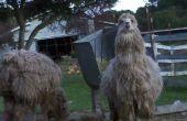 Instructables - maken van TAGS voor mijn vrouw Alpaca's