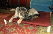 Verhoogde bed van de hond