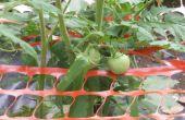 Tuin luifel voor tomaten