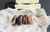Het groeien van zaden zonder bodem!