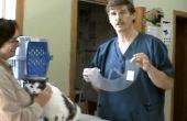 Hoe te zetten een Elizabethaanse kraag op een kat