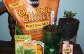 Zelf water gerecycleerd plant pot voor het kweken van kruiden en bloemen