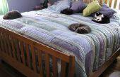 Hoe te PACK en verplaatsen uw kat veilig aan A nieuwe residentie