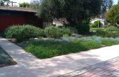 Smoren en vervangen van uw gazon met mulch