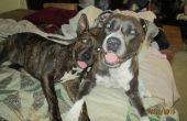 Natuurlijke remedie voor honden & vlooien
