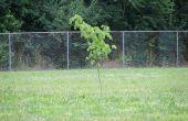 Guerrilla Gardening: Een basisgids
