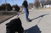 Skatejoring met honden