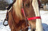 Hoe om te oefenen uw paard met tijdbeheer