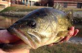 Bass Fishing voor profs en Beginners