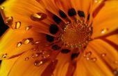 Bloemen en planten fotograferen
