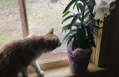 GENEZEN van Lily vergiftiging bij katten (thuis!)