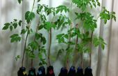 DIY hydrocultuur groeiende fles