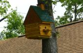 Vliegende eekhoorn huis w/Spy Cam