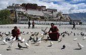 Tips: acclimatiseren op grote hoogte tijdens de eerste twee dagen in Lhasa.1