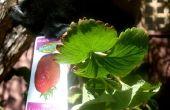 Naai A Grow-Bag of ondersteboven Planter tas