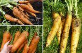 How to Grow een binnentuin