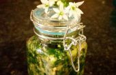 Wilde knoflook en basilicum Pesto van dikke