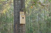 De ultieme ongediertebestrijding - een eenvoudige vogel huis!