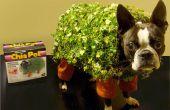 Echo van de Chia Pet Dog kostuum