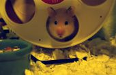 Bijhouden hoe ver uw Hamster loopt
