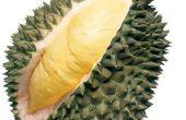 Hoe denkt iedereen durian? Of wat zijn de voordelen van durian eten?