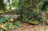 Botanische tuin foto Safari: Zakken de beste foto's