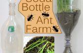 Frisdrank fles Ant Farm