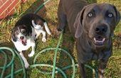 Basisopleiding gehoorzaamheid voor honden