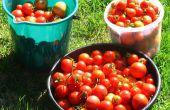 Herconfigureerbare groente tuin drenken systeem