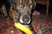 Hoe te eten van een banaan als een hond