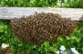 Een zwerm bijen verzamelen