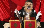Verbazingwekkende Magician zagen-assistent in Half kostuums