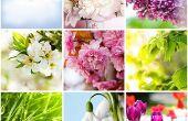 Beste tuin planten groeien in het winterseizoen