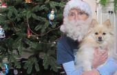Hoe maak je een Santa baard van hond haar