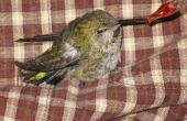 Hoe om te redden van een kolibrie