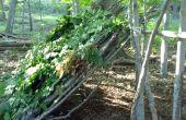 Hoe maak je een aangebouwd schuilplaats in het bos Deciduous