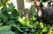 Eetbare Hedges - om het meeste uit uw perceel met boom voedergewassen en boom hooi