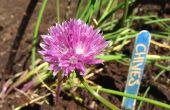 Plant Markers van ambachtelijke stokken