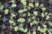 Wat voor Plant in uw moestuin in januari
