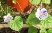 Apocalyps tuin/achtertuin verfraaiing
