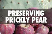 Behoud van Prickly Pear
