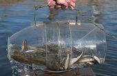 Hoe maak je een val in 30 sec vis