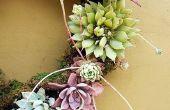 5 gemakkelijke stappen aan het maken van een levende succulente krans